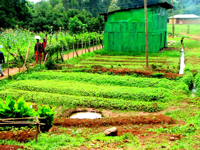 Moringa Garden to help health care in Ethiopian village