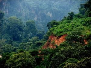 sidamaforest