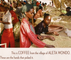 Villagers of Aleta Wondo, Ethiopia picking coffee as a business