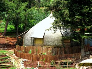 hut with fir